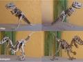 T Rex & Velociraptor